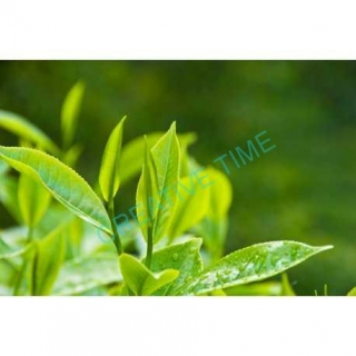 Tea Tree oil silica 10 ml